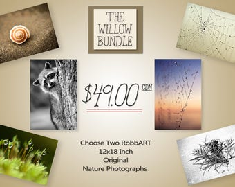 The Willow Bundle - Two 12x18 Large Canadian Nature Photographs - You Choose Wall Art
