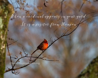 When a cardinal appears in your yard, it is a visitor from heaven Springtime Photograph with saying