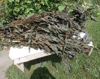 Perilla Green Shiso 2oz, 6oz, 16oz Organic Picked fresh Air dried Japanese basil Zisu Wild seasame Perilla frutescens Wildcrafted