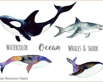 Watercolor Ocean Whale Clipart-hand painted shark-digital illustrations.