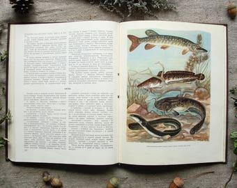 Fisherman-Sportsman's Desk Book - 16 Color Plates - Hardcover - Vintage Soviet Book, 1960. Fish Sport fishing Angling Illustration Print