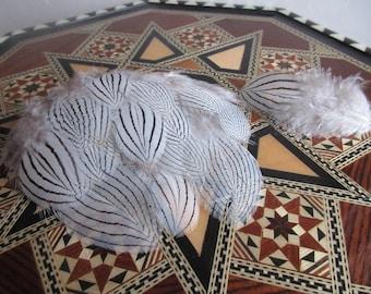 6-10cm black white striped 20pcs silver pheasant feathers