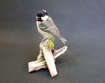 TAXIDERMY Coal Tit (Periparus ater) no.9662. Mounted On Driftwood. Garden Bird. Tit Family.