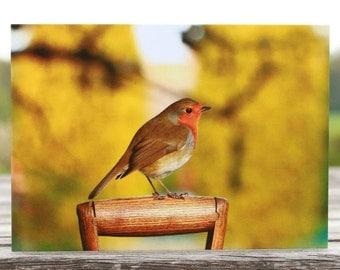 Robin greeting card, robin card, robin photo card, blank card, bird card, wildlife card, animal card, robin birthday card, Christmas card