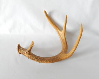 real deer antler, PA white deer, craft supply, home decor, table decor