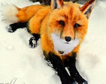 SOLD Fox Serge -  handmade stuffed realistic animal