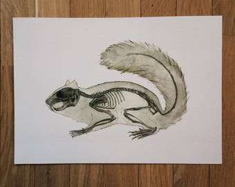 Squirrel, skeleton, anatomy art, print, watercolor painting, drawing, picture