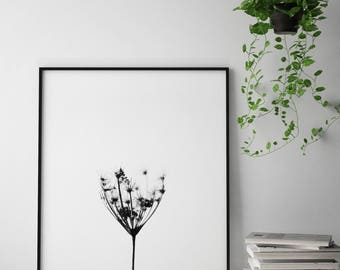 Botanical black and white art print, weed art print, dandelion wall art, botanical photography print, dandelion photo printable