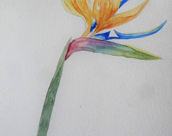 Watercolor flower - Parrot beak - Parrot's beak - watercolor Flower