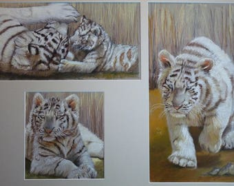 Small white, pastel Tigers