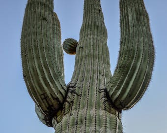 Cactus, Saguaro, Southwest, Desert, Landscape, Green, Digital Download