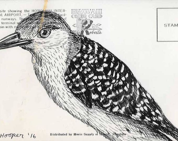 Woodpecker - Original ink drawing on vintage post card by Mr Hooper of Nashville, Tennessee