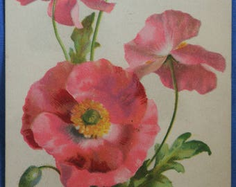 Tuck Large Pink Flower Green Stems Floral Antique Divided Back Postcard