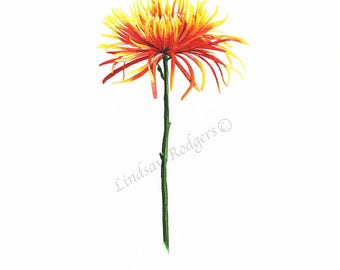 Chrysanthemum print, art print, flower print