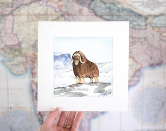 Musk Ox - Original Art Watercolor Painting Illustration, Arctic Animal Series for Roam the Globe Project, Artist Sarah-Lambert Cook
