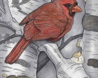 Cardinal in Birch Tree Greeting Card