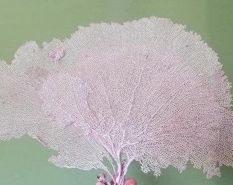 "Natural Dried Bahama Sea Fan Coral 8-12""- Coastal Home Decor/ Floral Arrangement/ Mermaid Crown/ Craft Supplies/ Coastal Home Decor/"