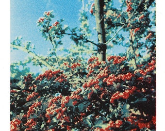 Buds - A4 Risograph print