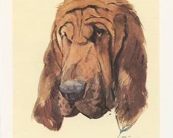 Bloodhound 1975 Illustration de chien de Saint-Hubert vintage  Cadeau chien Portrait de chien Aquarelle de chien Peinture de chien