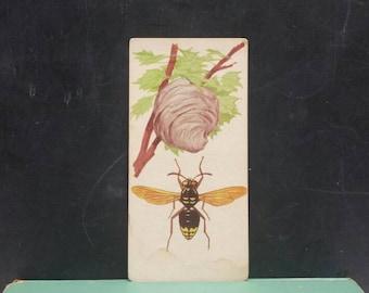 Vintage Hornet Flash Card Insect Color Illustration Paper Ephemera Art Decor Nature Bugs Collage Crafts Supply