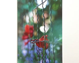 "Overcoming Analog Film Photograph 5x7"" Fine Art Print plus Mat"
