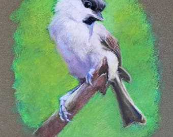 "Original Painting of Chickadee Bird 8 1/2"" x 11 1/2"""