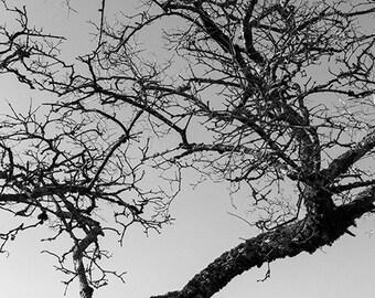 Pray II. - Tree