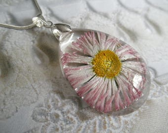 Pink & White Ombre English Daisy Encased In Glass Teardrop Pressed Flower Pendant-Symbolizes Loyal Love-Nature's Art-April's Birth Flower
