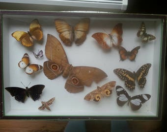 N.Boubée, Paris butterflies / moths