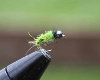 Green Caddis Larva