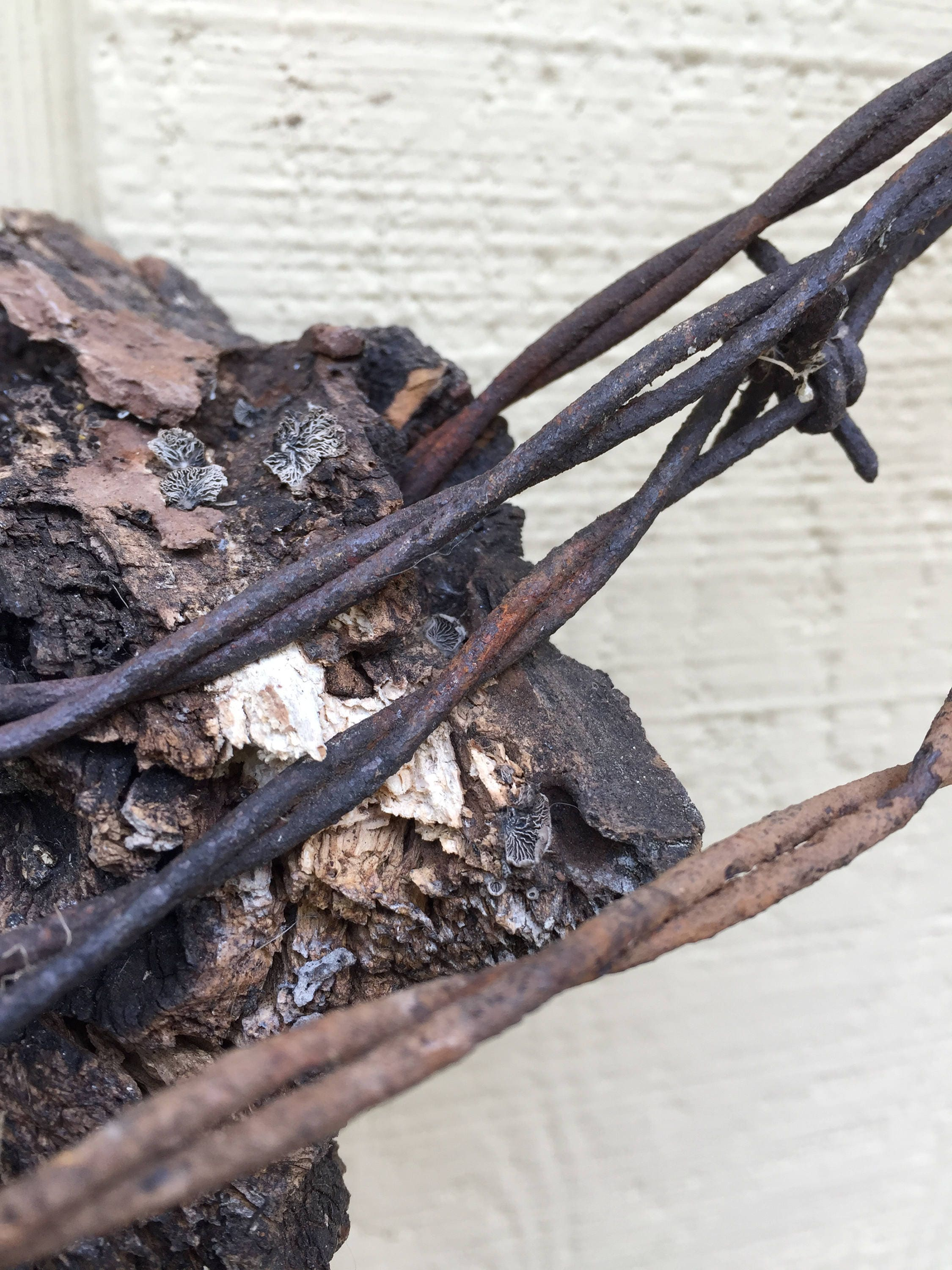 Antique Barbed Wire Wreath, Vintage Barbed Wire Imbedded Oak Tree ...