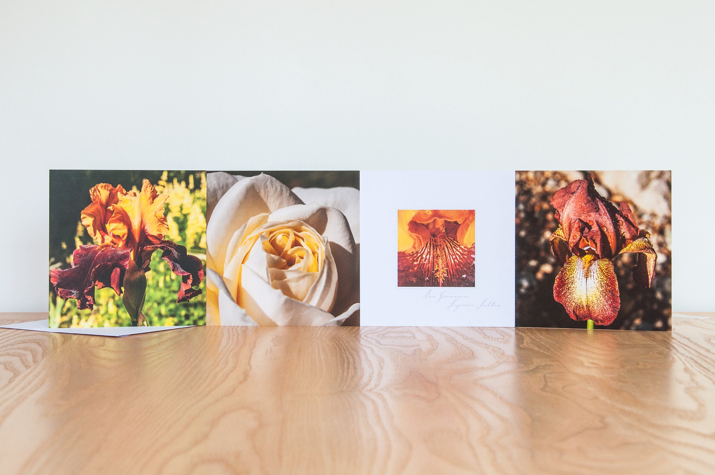 Floral cards flower cards photographic greetings cards pack of 4 floral cards flower cards photographic greetings cards pack of 4 blank inside kristyandbryce Image collections