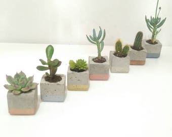 Trio of Metallic Enamel Dipped  Mini Concrete Succulent/cacti Planters