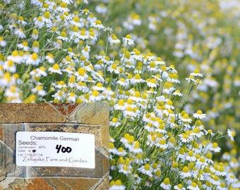 German Chamomile Seeds. Packet-1/2 LB Easy Grow Herb Tea Flower Best Sale #173