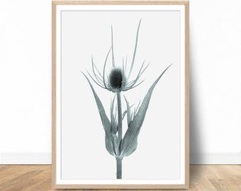 Thistle Wall Art, Thistle Print, Thistle Art, Thistle Photo, Thistle Decor, Nature Photography, Gray Printable Art, digital download