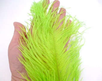 """Large GreenOstrich Feather_ PP6641/P12/104_FEATHERS ostrich/ Green of 32 cm / 12,59""""_ pack 1 pcs"""