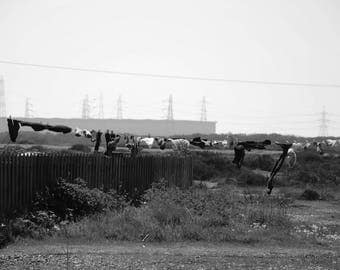 Dungeness A4 photo print with white border 'Blowing in the Wind'