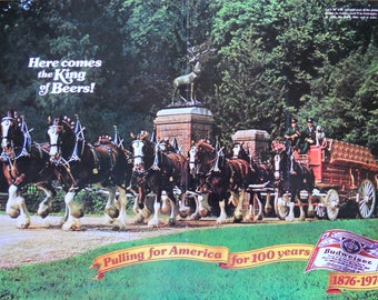 Budweiser Clydesdales. 1976 Budweiser Beer ad. Bicentennial Budweiser ad. Budweiser Clydesdale ad. Vintage 1976 Budweiser Beer ad.
