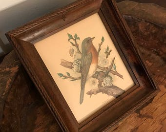 Vintage P.H. Gonner Eastern Bluebird Framed Audobon Bird and Cherry Blossoms Art Print