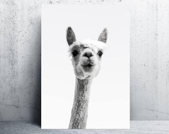 alpaca print, alpaca print wall art, alpaca printable, lama print, printable art, alpaca photography, printable wall art, digital prints
