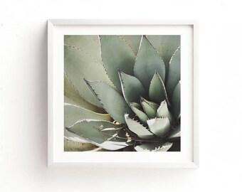 agave print, succulent photo, desert art, green baby nursery decor, desert printable, garden gift, nature photography, for her, dorm decor