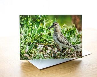Dunlin Photo Greetings Card (A6) Notecard Photograph Wildlife Animal Bird Nature Wader