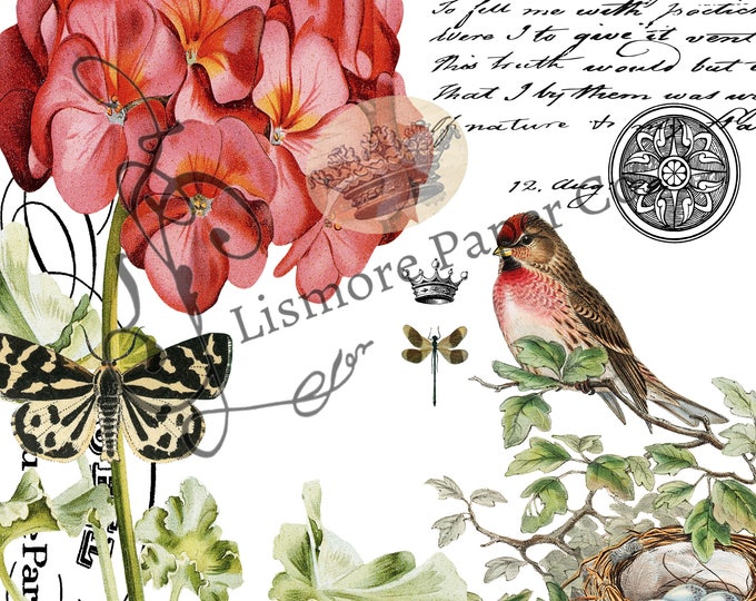 Vintage Bird Botanical Architecture and Script Collage Instant Download Feed Sack PNG JPEG Transfer Image