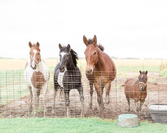 "20x30 canvas print - ""Waiting"" - horses waiting by the fence on the farm"