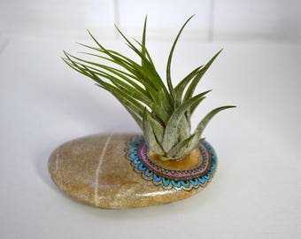 Mandala stone, ISAR Pebble with plant