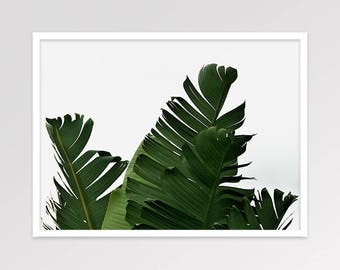 Banana Leaf Print, Tropical Leaves Photography, Palm Leaves Wall Art, Large Leaves Home Decor, Printable Art, Instant Download