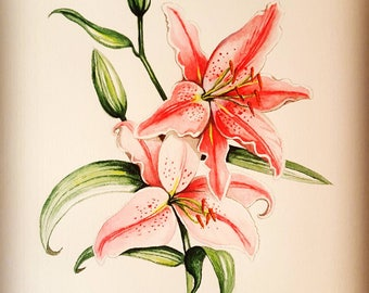pink original watercolor painting,flowers,lily, botanical art,handmade,not print, home décor, floral art, wall décor
