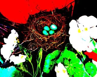 Robin's Eggs in Nest. Digital Photography