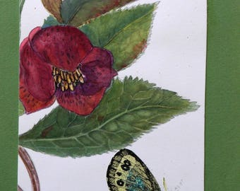 Map Art, watercolor, hellebores or Christmas rose