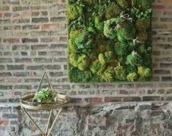 Moss wall art, live moss hanging, carefully designed for your home HUGE NEW YEARS sale